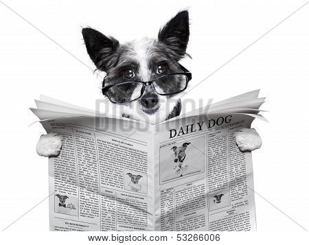 dog reading and holding a blank newspaper poster