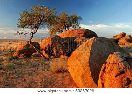 Landscape with granite boulders and trees at sunrise, Brandberg mountain, Namibia