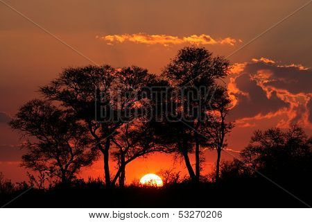 Sunset with silhouetted African savanna trees, Kruger National park, South Africa