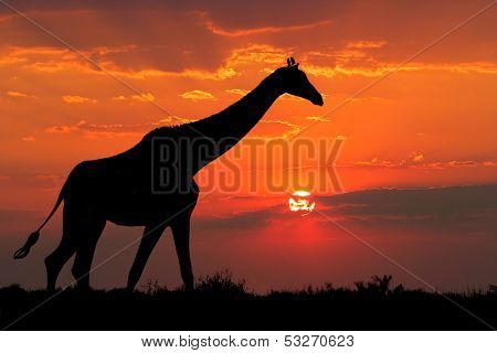 A giraffe silhouetted against a dramatic sunset with clouds, South Africa