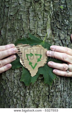 Environmental Conservation Tree
