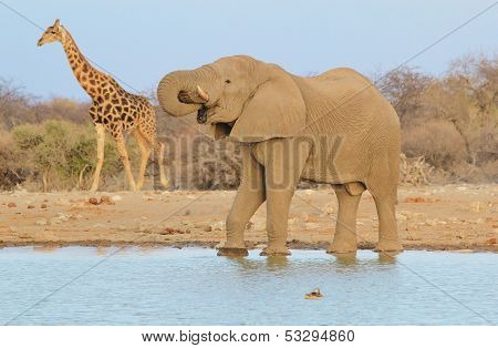 Elephant, Giraffe and Duck - Wildlife Background from Africa - Size is relevant
