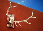 Mounted an elk antlers hanging on an exterior adobe wall. poster