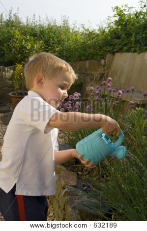 Young Boy Watering Garden.