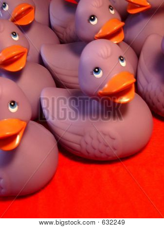 Purple Ducks