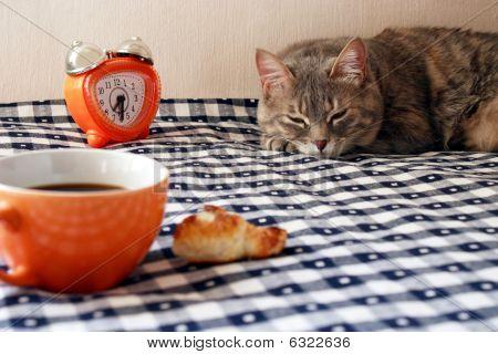 Morning Wecker, Tasse Kaffee und Schläfrigkeit Katze