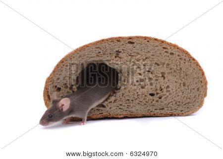 Mouse And The Bread