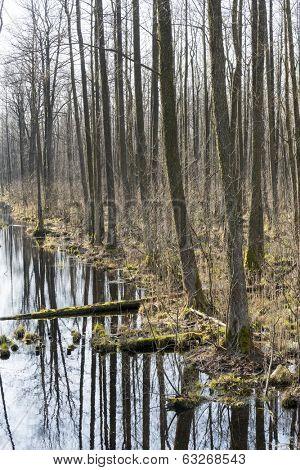 Early spring in the Biebrza National Park, Poland, Podlasie