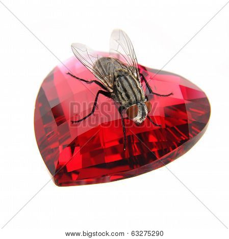 Fly On  Red Gemstone