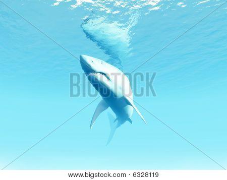 Undersea Shark