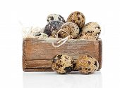 quail eggs isolated on a white background poster