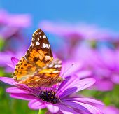 Closeup photo of beautiful butterfly with gorgeous colorful wings sitting on purple flower, beauty of nature, summer time season  poster