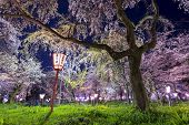 """Kyoto, Japan at Hirano Temple festival grounds in spring. The lantern reads """"Moonrise, Hirano Temple"""" poster"""