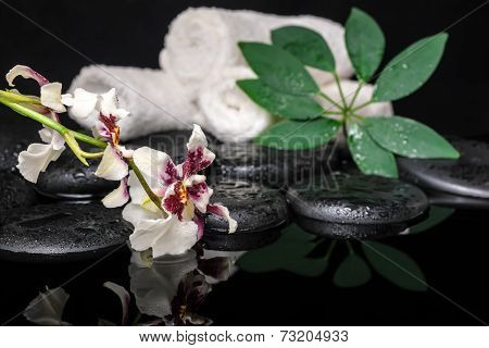 Healthcare Concept Of Orchid Cambria Flower, Green Leaf Shefler With Drops And White Towels On Zen S