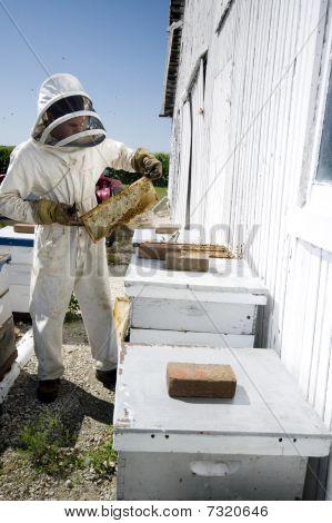 Beekeeeper Performing Hive Maintenance