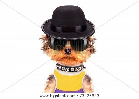 Dog dressed as mafia gangster on a white background poster