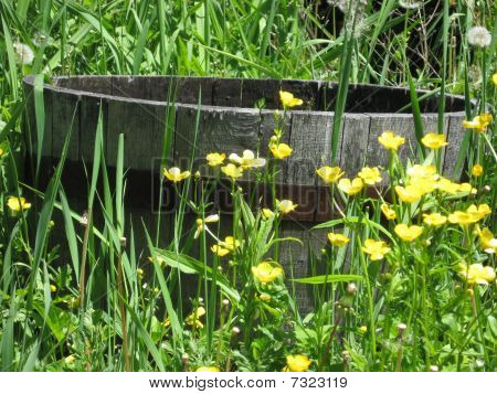 Old wash basin in a field of flowers