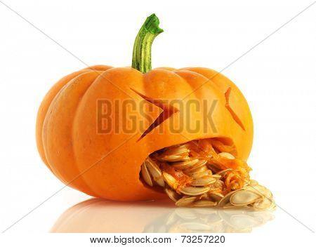 Pumpkin being sick