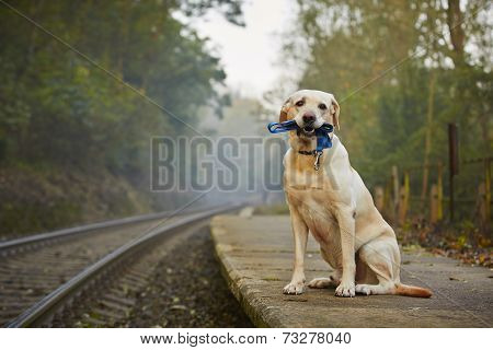 Dog On The Railway Platform
