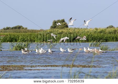 Seagulls In A Waterbody