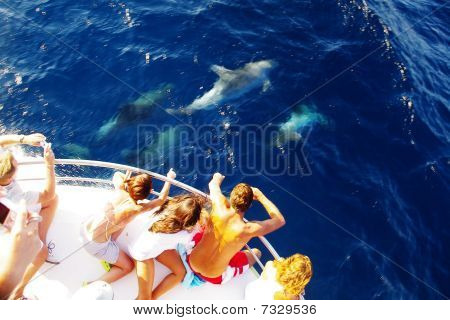 Some dolphins gather below a boat in the Adriatic sea, to play with the waves it creates, for the fun and amazement of everybody on board.