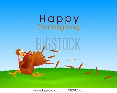 Turkey bird running in fear, Creative concept for Happy Thanksgiving Day celebrations.