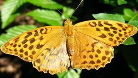 beautiful yellow butterfly during the rest of the leaves
