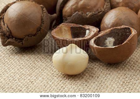 Broken macadamia  nuts in nutshells