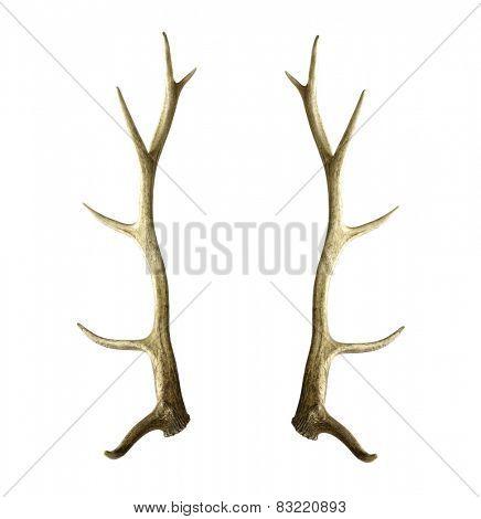 Matched pair of ELK or Wapiti (Cervus Canadensis) antlers