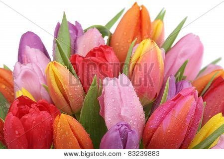 Tulips Flowers Bouquet In Spring, Birthday Or Mother's Day Isolated