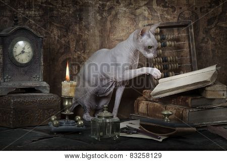 Don Sphinx Cat Reading The Book