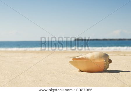 Large Shell And Beach