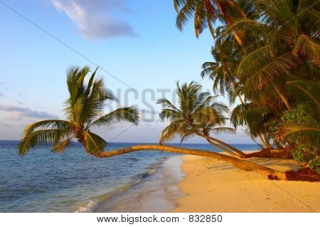FANTASTIC SUNSET BEACH WITH PALM TREES