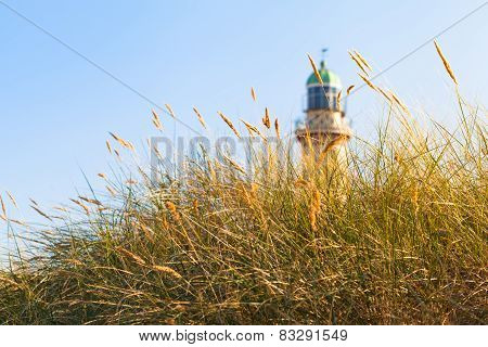 Beach Grass and Lighthouse in the Sunlight