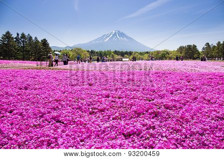 NASHIYAMA, JAPAN- 11 MAY. 2015: People from Tokyo and other cities or internatoinal come to Mt. Fuji