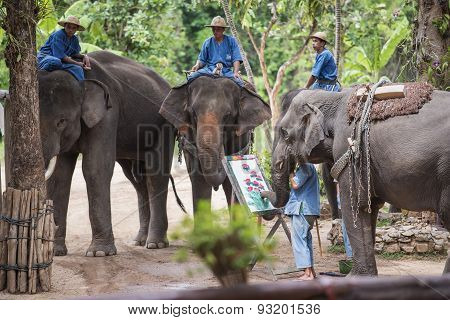 Daily elephant show at The Thai Elephant Conservation Center.