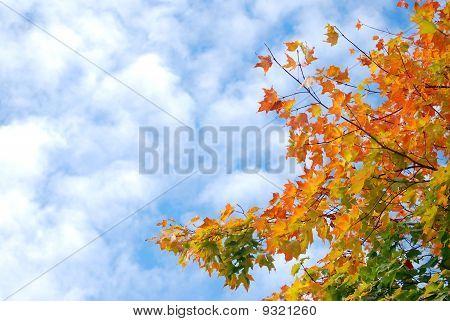 Puffy Clouds in an Autumn sky