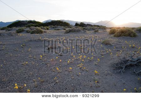 Spring Flowers Bloom From The Nevada Desert