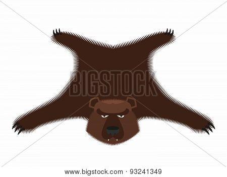 Bear pelt. Big brown bear Grizzly hide. Hunting trophy. Vector illustration