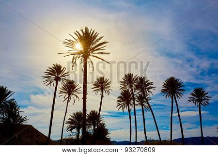 Almeria in Cabo palm trees in Rodalquilar beach at Mediterranean Spain