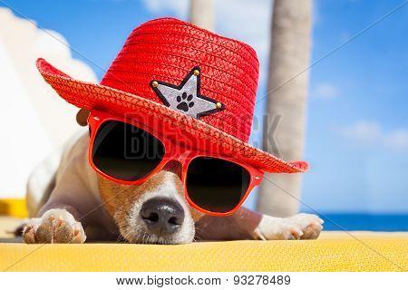 Dog Siesta