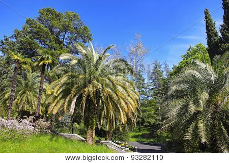 Walkway In A Beautiful Park With Palms