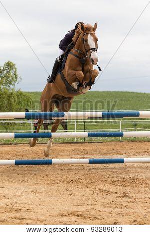 Horsewoman Hidden Behind A Horse's Head In High Jump