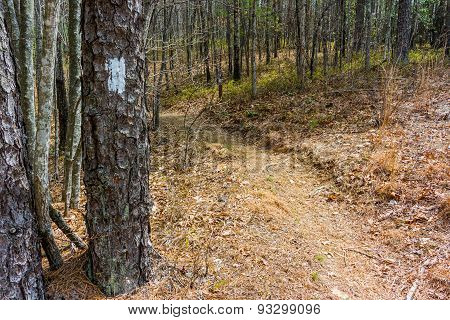Blaze Along South Carolina Trail