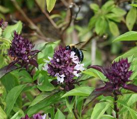 Buzzzz  Bee!
