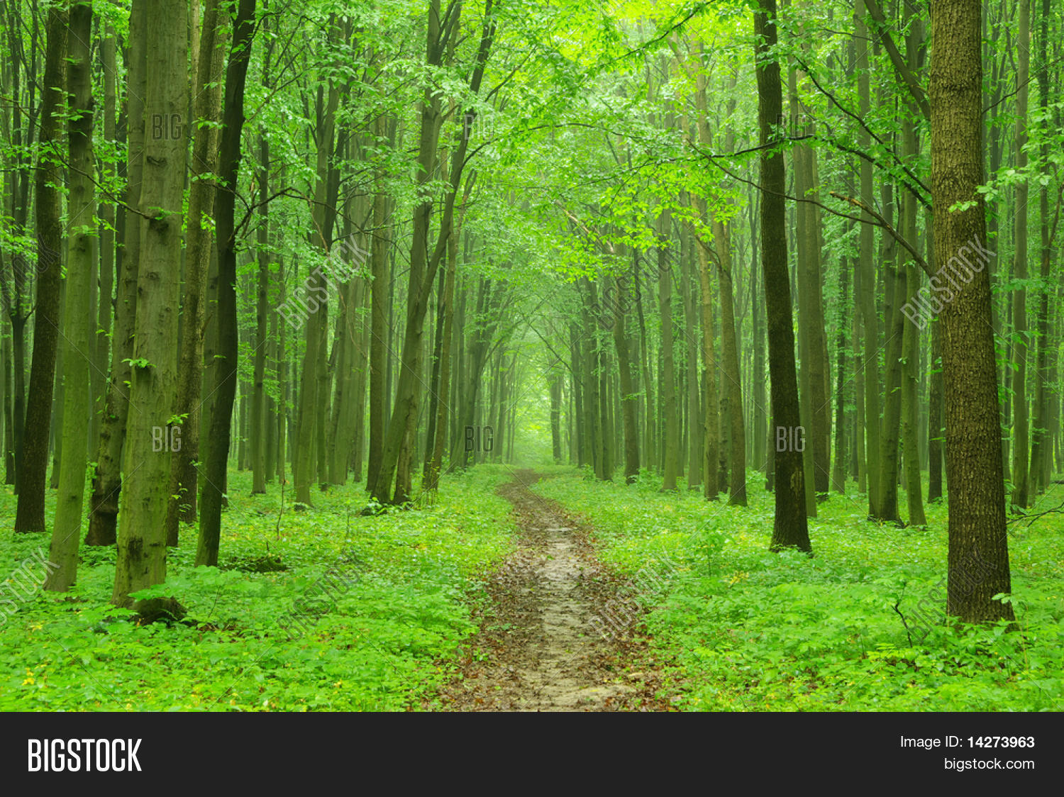 best templates  forest powerpoint background