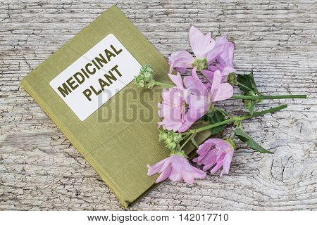 Medicinal plant Malva moschata (musk mallow or musk-mallow) and herbalist handbook on old wooden table. Mallow is used in herbal medicine and medical cosmetology