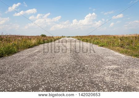Country Road.in field