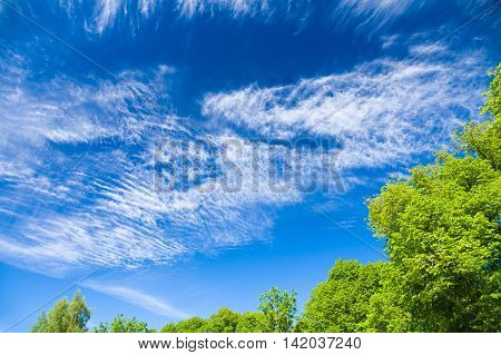 Trees against blue sky with scenic cirrus and stratus clouds