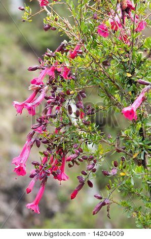 Flowers In Mountains